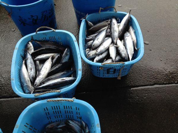 鮮魚4.JPG